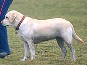 Majitelé ps� v �eských Bud�jovicích se u� nebudou moci vymlouvat, �e nemají