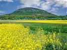Hora Říp. Národní kulturní památka, ležící v úrodném Polabí, v obležení