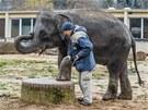Vrchní chovatel slonů Jiří Javůrek o slony pečuje 13 let, ale poprvé dostal do
