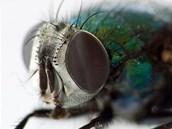 Váš leguán či ropucha mouchy z domácího chovu jistě ocení.