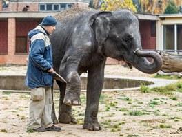 Obě mladé slonice se učí základním cvikům, které usnadní manipulaci snimi a