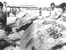 Trosky letu 858 byly vyplaveny na thajské pobřeží.