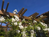 Protože majitelka by na zahradu ráda vnesla venkovské prvky, popínavé růže by