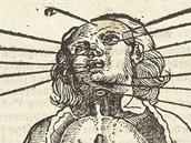 Místa na lidském těle, kde lze pouštět žilou podle knihy Hanse von Gersdorffa