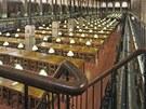 Na galerii s knihami lze vystoupat po čtyřech schodištích umístěných v rozích.