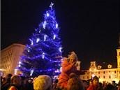 Vánoční jedla na Masarykově náměstí v Jihlavě
