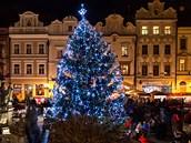 Strom na pardubickém Pernštýnském náměstí
