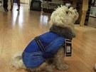 Maltézský psík v zimním oblečku