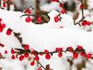 Sníh sám o sobě rostlinám neubliží, funguje naopak jako přirozená izolace a...