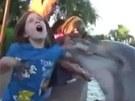 Krmení delfínů může být nebezpečné.