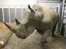 Kashka se na jaře přidá ke dvojici nosorožčích samic, které Zlín dřív získal