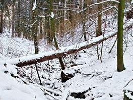 Cesta zHradiště do údolí Chrudimky klesá v kaskádách podél tekoucího potůčku.