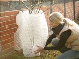 Bublinková fólie je na ochranu rostlin také vhodná: dobře izoluje a je světlá,
