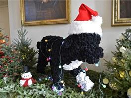 Replika portugalského vodního psa Bo je snad v každé místnosti. Vždy je udělaný...