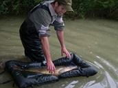 Ulovenou rybu vždy pouštíme z podložky...