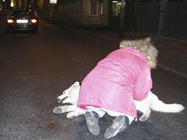 Vystresovaná a dezorientovaná zvířata se často stanou obětí dopravní nehody. V