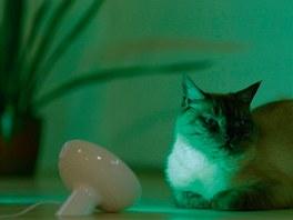 Svítidlo Philips LivingColors Bloom Black nabízí výběr ze 16 milionů barev,