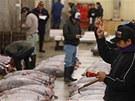 První letošní dražba tuňáků v Tokiu (5. ledna 2013)