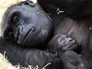 Takhle odpočívá Kijivu s mládětem