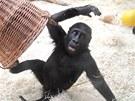 Kiburi si při hrách často vystačí sám.