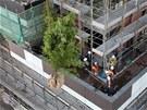 Balkony a terasy za��naj� d�ln�ci osazovat vzrostl�mi stromy.