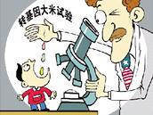 Ilustrace, kterou zprávu o experimentech s podáváním zlaté rýže dětem