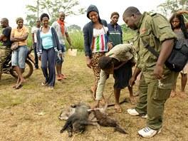 Dra�ba bushmeatu