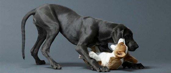 Pozorovat dva hrající si psy, to je lepší než televize.