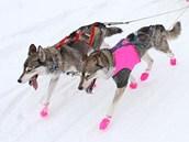 Šediváčkův long v Orlických horách. (23. 1. 2013)