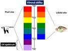 Na rozdíl od lidí vnímají ptáci UV paprsky zrakem a vidí samolepky s UV efektem...