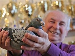 Tam, kde je holub poprvé vypuštěn, se také vrac í. Proto holubi, které chce