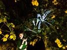 Noční prohlídky ve skleníku Fata Morgana v trojské botanické zahradě.
