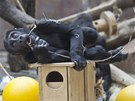 Kiburi je pohodové mládě, které si užívá lásku všech členů rodiny.