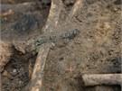 Na jedn� z kost� na�li archeologov� zbytek n�ramku.