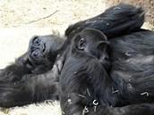 Kiburi přitulený k březí tetě Kambě