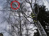 Kočka zůstala v koruně stromu na více než deset hodin.