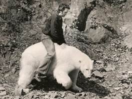 Manželům Tilčovým se v roce 1976 podařilo odchovat první mládě ledního medvěda