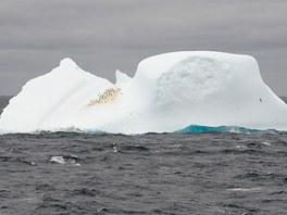 První plovoucí kry oznamují blízkost Antarktidy. Na této se usídlila kolonie