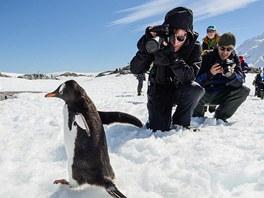 Na tučňáky si teleobjektiv brát nemusíte…
