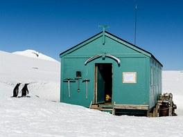 Dobrý den! Je někdo doma? Tučňáci oslí nakukují do polární stanice...