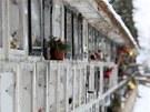 P�tat�icetilet� recidivista z kolumb�ri� vyp��il 72 ok�nek, vyml�til z nich