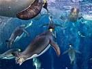 1. m�sto P��roda (s�rie) - Paul Nicklen, Kanada, pro �asopis National