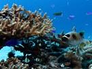 Korály – minulost, přítomnost a budoucnost ostrova