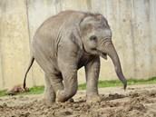 Sloní slečna Rashmi stále přibývá na váze. A trauma z toho zjevně nemá.