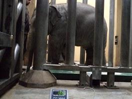 Důkaz, že Rashmi váží už tunu.