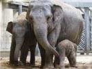 Sloní samice Donna se svými dvěma dcerami