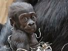 Prosincovému mláděti Kijivu a Richarda jsou dva měsíce a má se čile k světu.