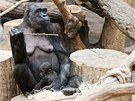 Kijivu s dvouměsíčním mládětem