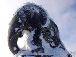 Omrzlé slůně na Králickém Sněžníku