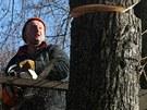 Kácení stromů na Masarykově třídě začalo v pondělí. Letos jich půjde k zemi